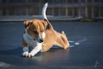 beagle kennel skåne